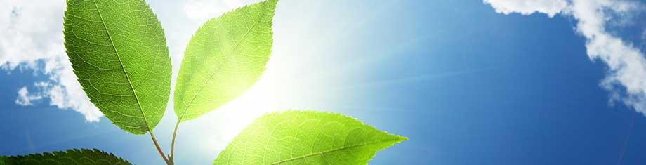 Lipman-Environmental-Law-Orange-County-NY